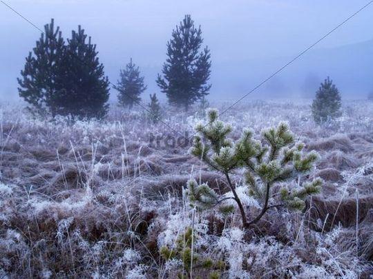 Frosty daybreak near Prasily village in Bohemian Forest National Park, Sumava National Park, Bohemia, Czech Republic, Europe