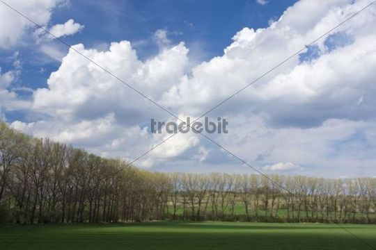 Spring landscape near Mutenice, Hodonin district, South Moravia, Czech Republic, Europe