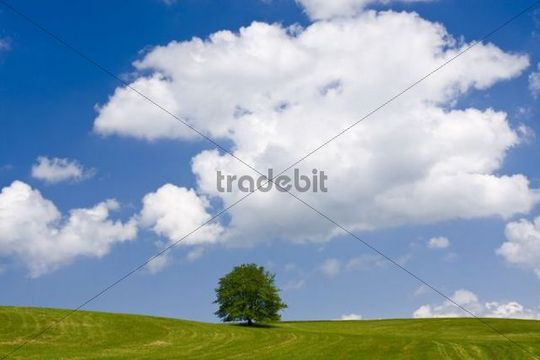 Green field near Helvikovice, East Bohemia, Czech Republic, Europe