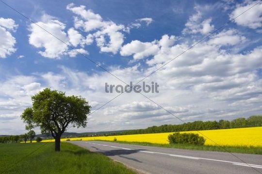 Road in spring landscape with rape field near Olbramovice, Znojmo district, South Moravia, Czech Republic, Europe