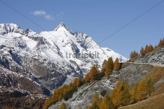 Grossglockner, autumnal larches, view from Grossglockner High Alpine Road, Hohe Tauern National Park, Carinthia, Austria, Europe