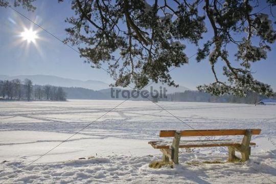Bench, view of the frozen over Staffelsee Lake in winter, Garmisch-Partenkirchen district, Upper Bavaria, Germany, Europe