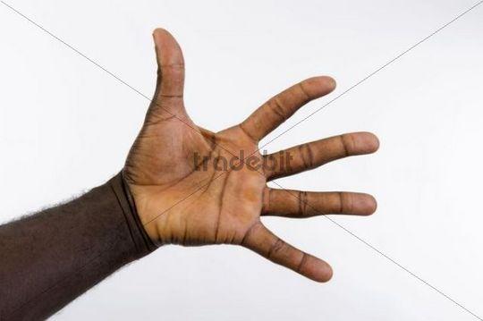 Dark-skinned palm