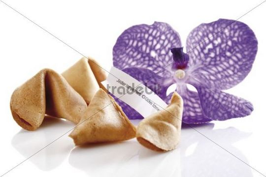 Fortune cookies with an orchid
