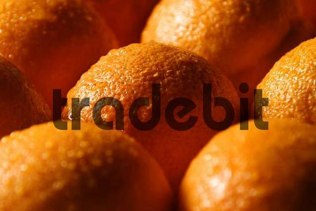 Oranges with water drops