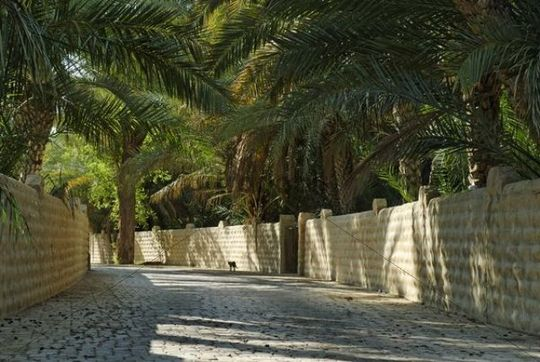 Palm Garden In The Al Ain Oasis Emirate Of Abu Dhabi