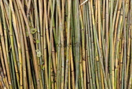 Rattan sticks, Kachin State, Burma, Birma, Myanmar, Asia