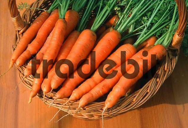 Carrots in basket Daucus carota sativus