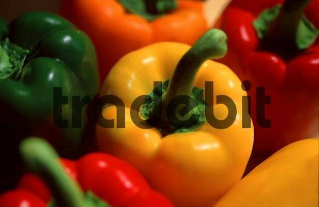 Pepper Capsicum annuum