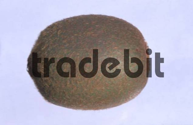 Chinese Gooseberry, fruit