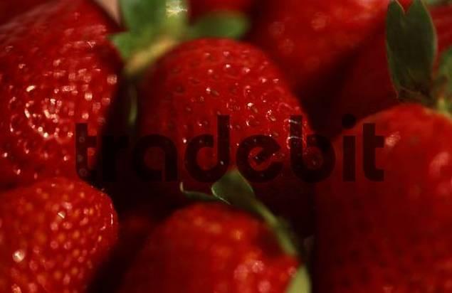Strawberries Fragaria x ananassa