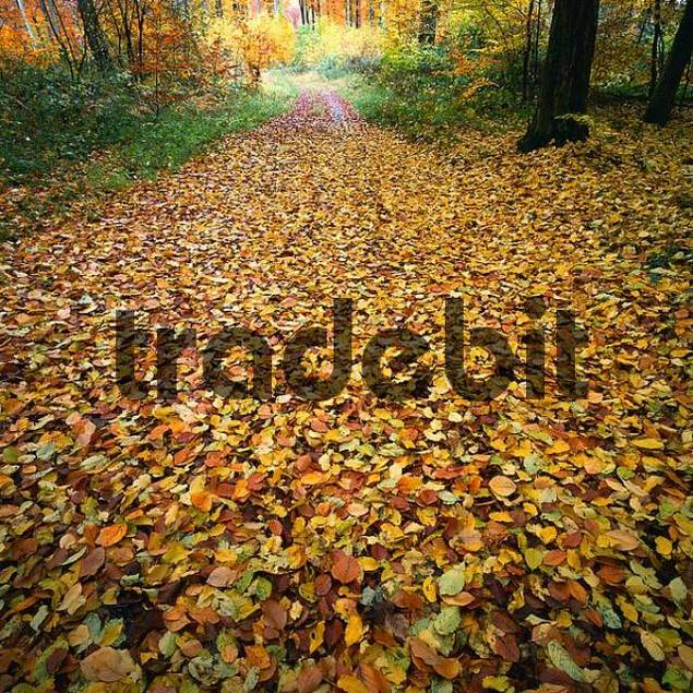 Forest path in autumn, Baden-Wurttemberg, Germany