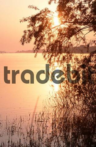 Sun rise at Elbe river, Gorleben, biosphere preserve Elbe, Lower Saxoy, Germany