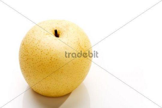 Nashi Pear Pyrus pyrifolia