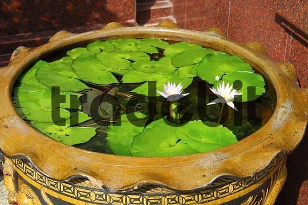 Water basin with water lilies Bangkok Thailand