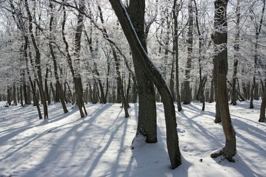 Winter forest in the Taunus mountain range, Hesse, Germany, Europe