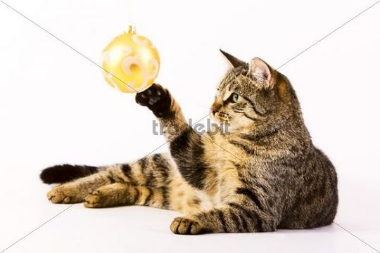 Domestic cat playing with a Christmas bauble