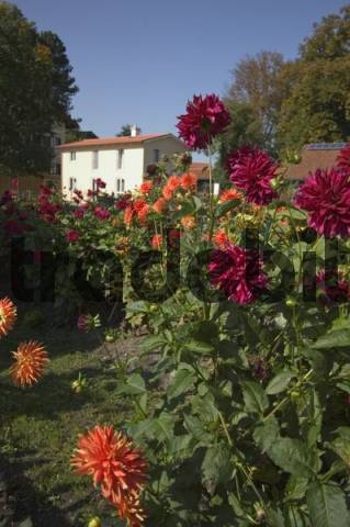 flower garden of the fishermens houses on the Fraueninsel at the Lake Chiemsee in the Chiemgau Upper Bavaria Germany