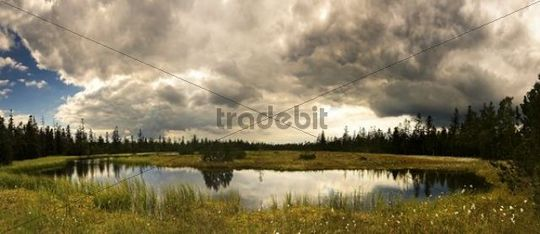 Hohlohsee Lake in summer, short before a storm, bog in the north of Black Forest, Baden-Wuerttemberg, Germany, Europe