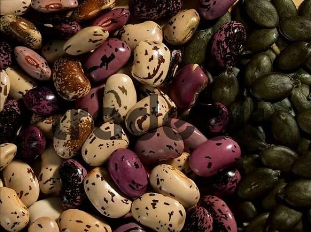 Runner Beans / Phaseolus coccineus, Phaseolus multiflorus