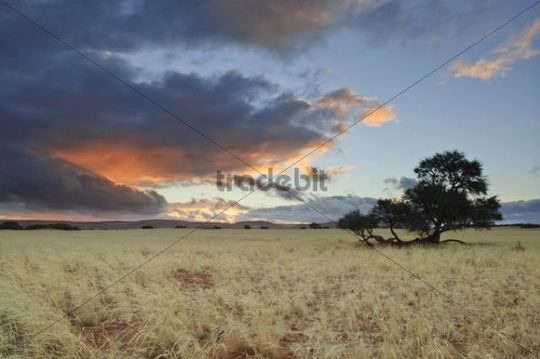 Evening mood at the edge of the Namib Desert near Sesriem after rainfall, Namibia, Africa