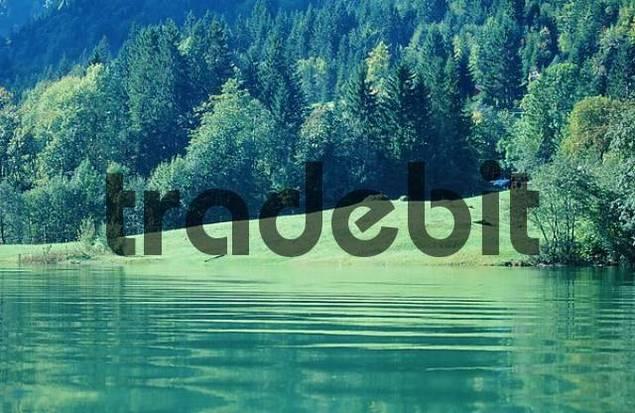 Lake and Mixed Forest, Switzerland / Wägitalersee