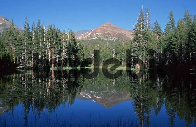 Mountain mirrored in calm lake at the Tioga road, Sierra Nevada, Yosemite national park, California, USA