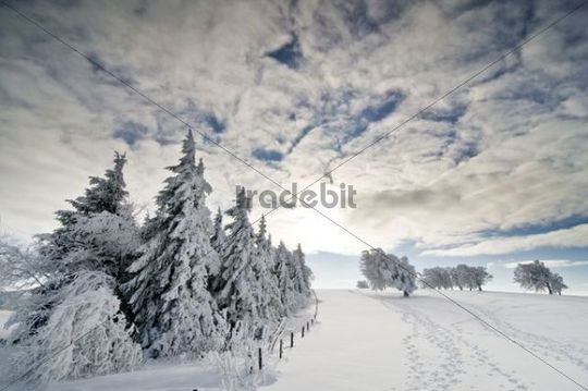 Snow-covered fir trees, clouded blue sky and sun, Black Forest, Baden-Wuerttemberg, Germany