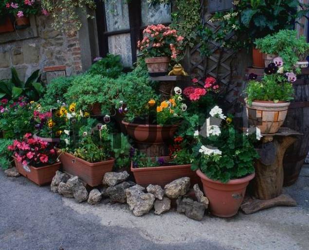 flower pots in front of house volpaia tuscany italy