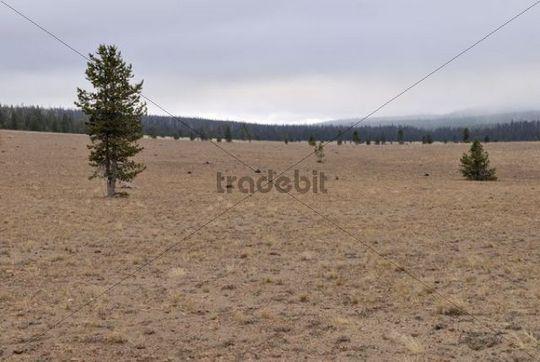 Pumice Desert, Oregon, USA