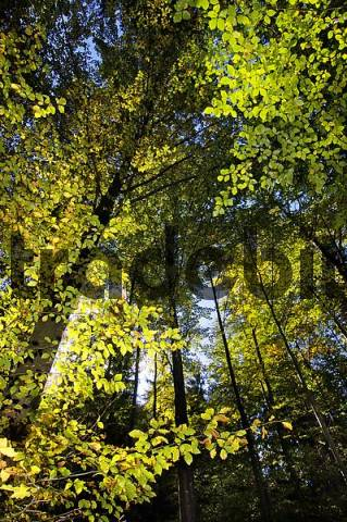 mixed forest in fall autmn near Convent Ettal Bavaria Germany