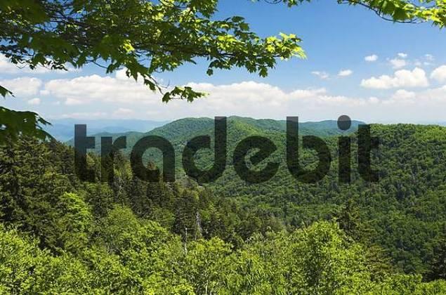 Great Smokey Mountains National Park, North Carolina and Tennessee, USA