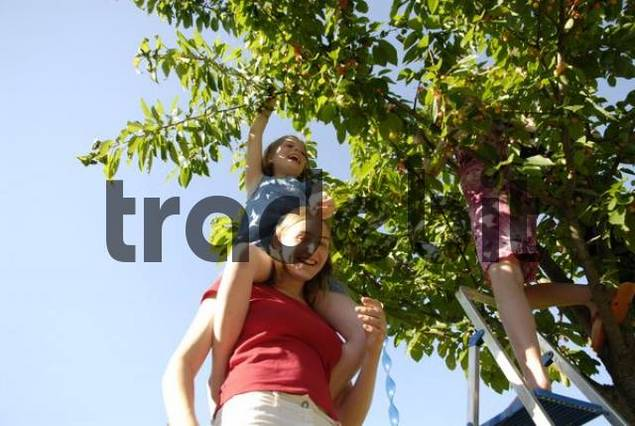 children pick cherries from cherry tree