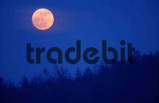 Full Moon above forest, Schleswig-Holstein, Germany