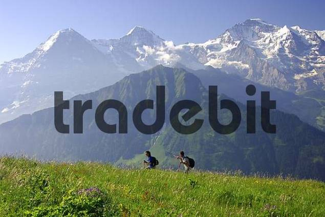 On a hiking tour near Grindelwald in front of Mt Eiger, Mönch and Jungfrau Bernese Oberland Switzerland