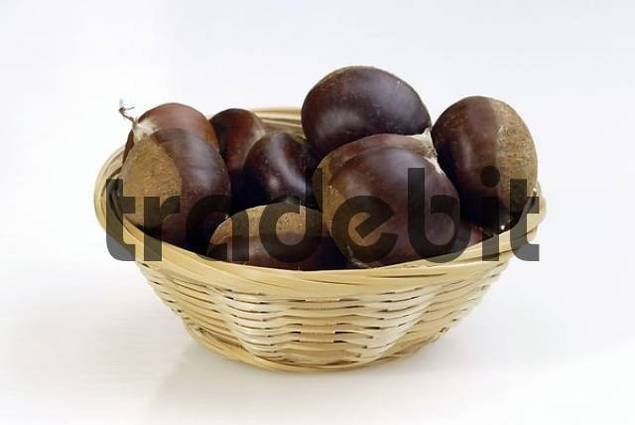 Sweet Chestnut fruits in basket / Castanea sativa