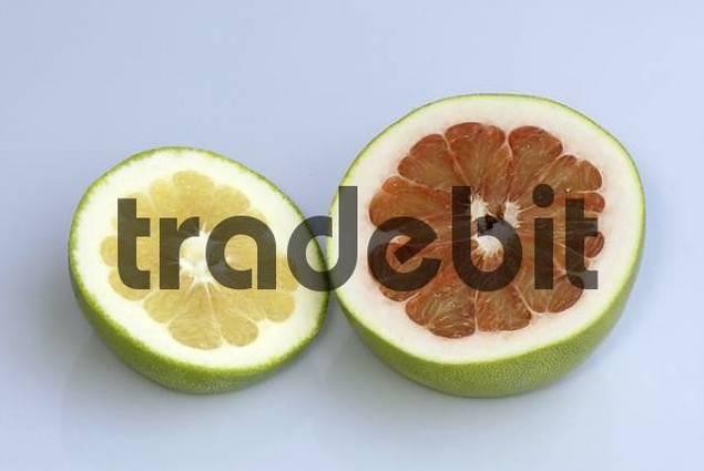 Grapefruit / Citrus maxima