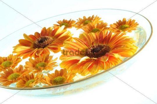 Bowl of water with orange coloured gerberas and winter chrysanthemum, wellness