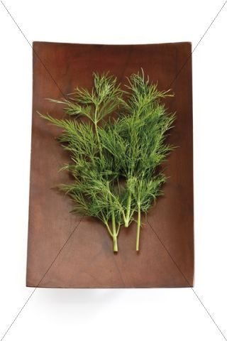 Dill (Anethum graveolens) in a wooden bowl