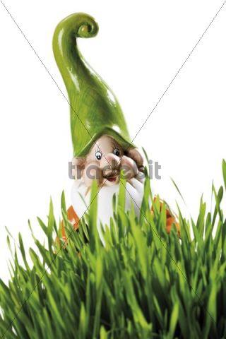garden gnom