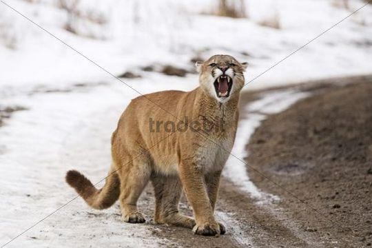 service animal cat
