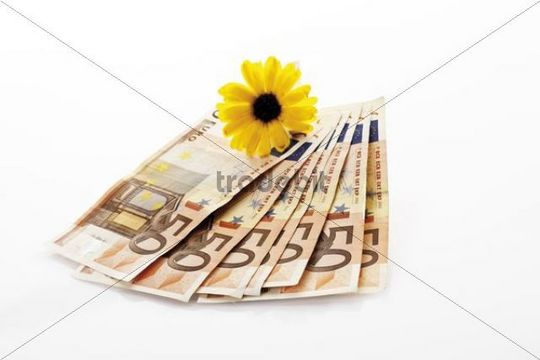 Forged euro banknotes