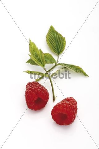 Raspberries with small leaves