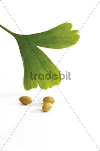 Ginkgo leaf with medical capsules