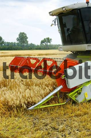 A combine Harvester harvesting crops - Frontpart with the harvesting tool