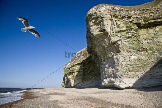 Bulbjerg, the only bird cliff in Denmark, Jutland, Denmark