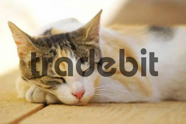 A Cat faeles is sleeping