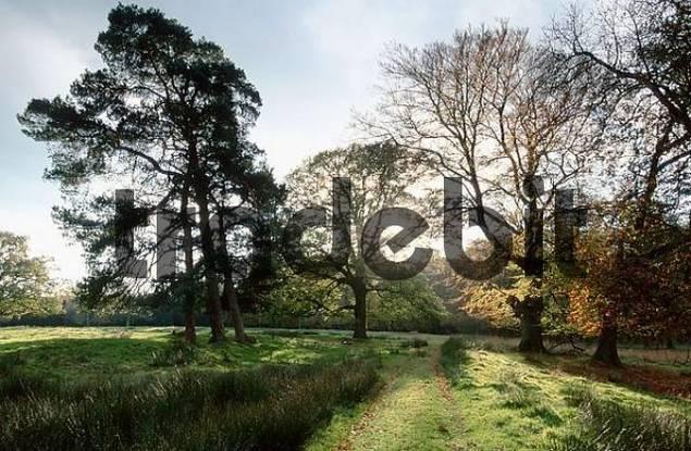 Trees in park, North Rhine-Westphalia, Germany