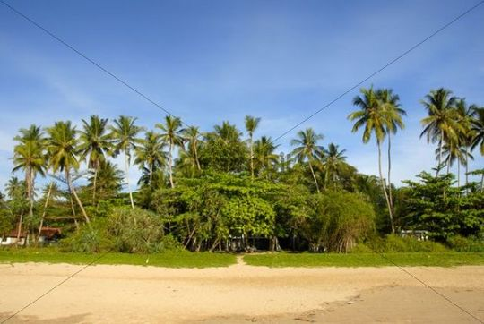 Sandy beach lined with palm trees, Talalla near Dondra, Indian Ocean, Ceylon, Sri Lanka, South Asia, Asia