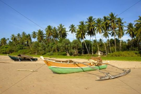 Fishing boats with outriggers on sandy beach lined with palm trees, Talalla near Dondra, Indian Ocean, Ceylon, Sri Lanka, South Asia, Asia